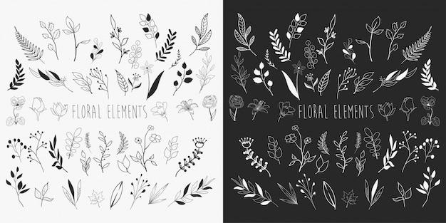 Éléments floraux dessinés à la main