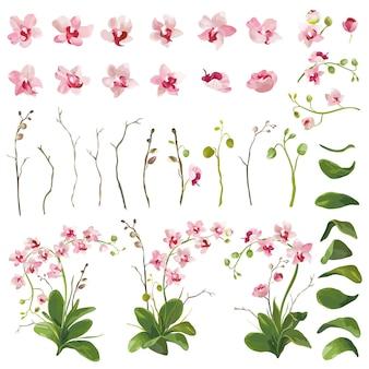 Éléments floraux de fleurs tropicales d'orchidée dans le style d'aquarelle. vecteur