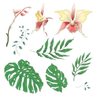 Éléments floraux d'orchidées fleurs tropicales