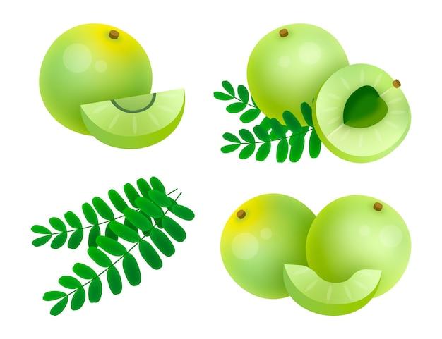 Éléments de fruits amla dessinés à la main