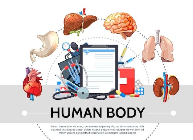 Éléments de soins de santé de dessin animé concept rond avec des organes internes humains comprimés presse-papiers kit médical stéthoscope