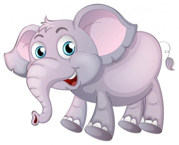 Éléphant sur blanc