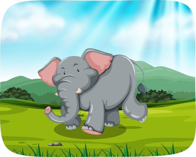 Éléphant dans la scène de la nature