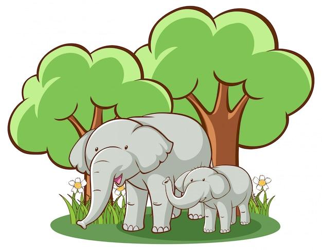 Éléphants sur fond blanc