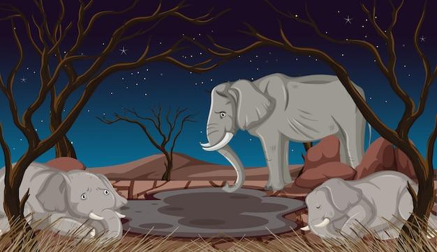 Éléphants mourants dans la terre ferme