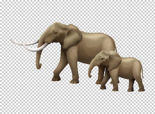Éléphants sauvages sur transparent