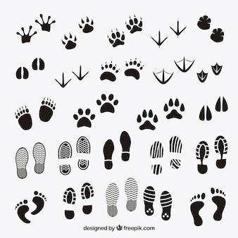 Empreintes de pas des ombres d'animaux et de l'homme