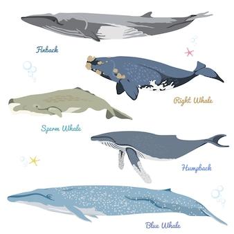 Ensemble de 5 baleines détaillées de l'illustration des icônes réalistes du monde, notamment le rorqual commun, la baleine noire, le cachalot, la baleine à bosse, la baleine bleue