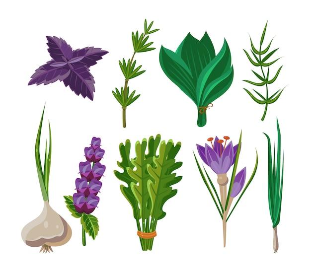 Ensemble de 9 herbes