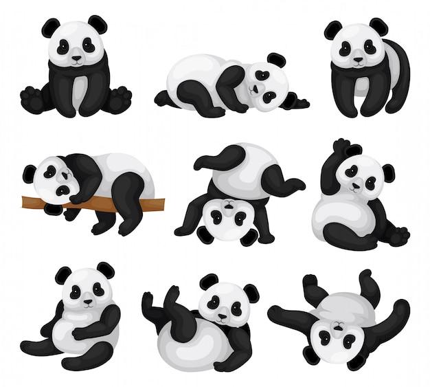 Ensemble d'adorable panda dans différentes poses. ours en bambou drôle avec fourrure noire et blanche et yeux brillants. animal mammifère exotique. éléments graphiques pour livre pour enfants. illustrations plates isolées.