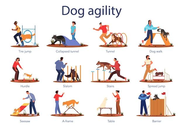 Ensemble d'agilité de chien. exercice d'entraînement pour animal de compagnie. formation femme et homme