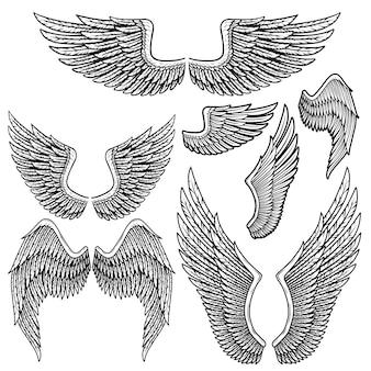 Ensemble d'ailes d'oiseaux monochromes de forme différente en position ouverte