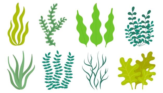 Ensemble d'algues dans un style simple. illustration vectorielle en style cartoon