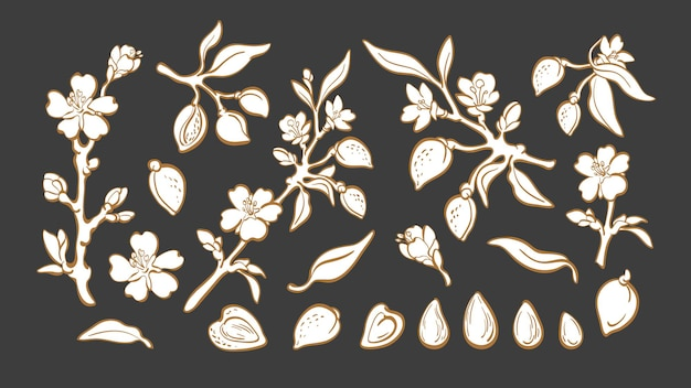 Ensemble d'amande noix naturelle branche botanique fruits feuilles fleur illustration graphique