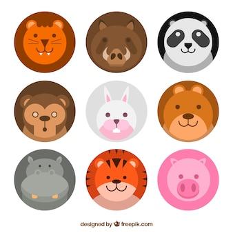 Ensemble amusant de beaux visages d'animaux