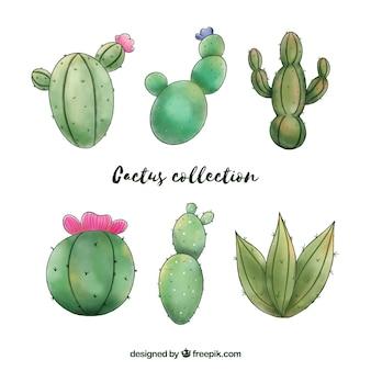 Ensemble amusant de cactus aquarelle