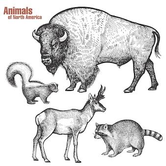 Ensemble d'animaux d'amérique du nord.
