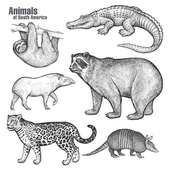 Ensemble d'animaux d'amérique du sud.