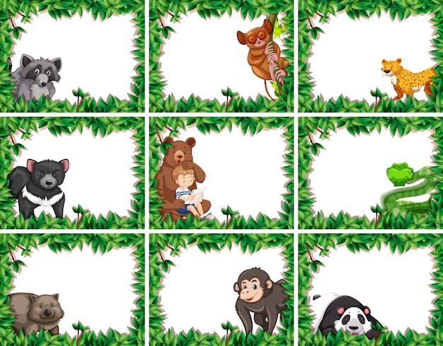 Ensemble d'animaux dans des cadres de la nature