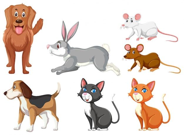Ensemble d'animaux domestiques