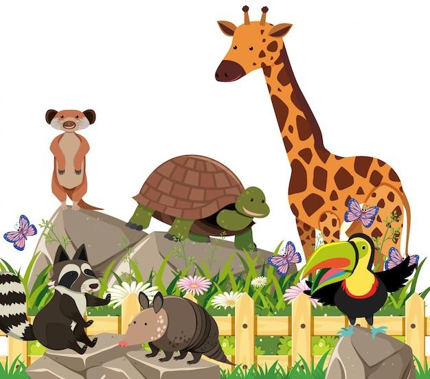 Un ensemble d'animaux exotiques