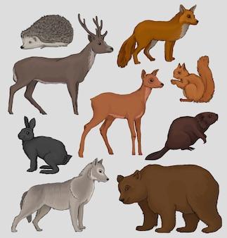 Ensemble d'animaux sauvages de la forêt nordique, hérisson, raton laveur, écureuil, cerf, renard, lièvre, castor, loup