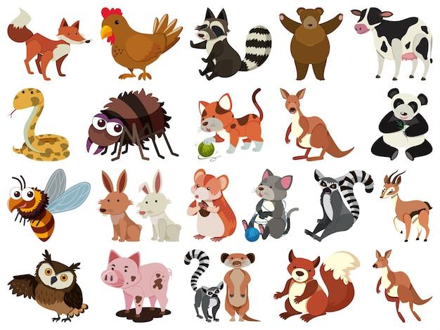 Ensemble d'animaux thème isolé des objets