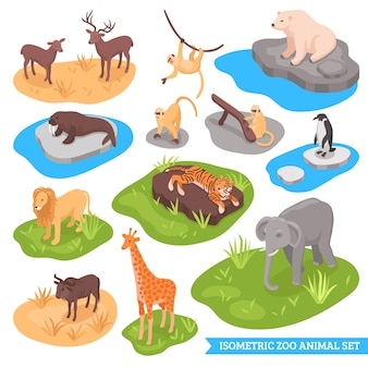 Ensemble d'animaux zoologiques isométriques
