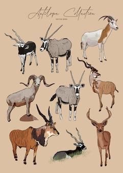 Ensemble d'antilopes, croquis dessiné à la main d'animaux