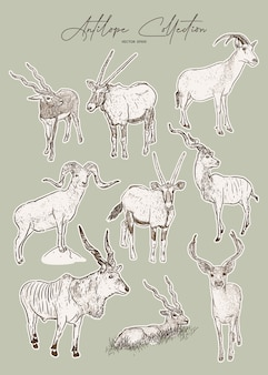 Ensemble d'antilopes, croquis dessinés à la main d'animaux