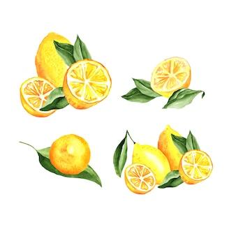 Ensemble d'aquarelle d'arrangement de citrons