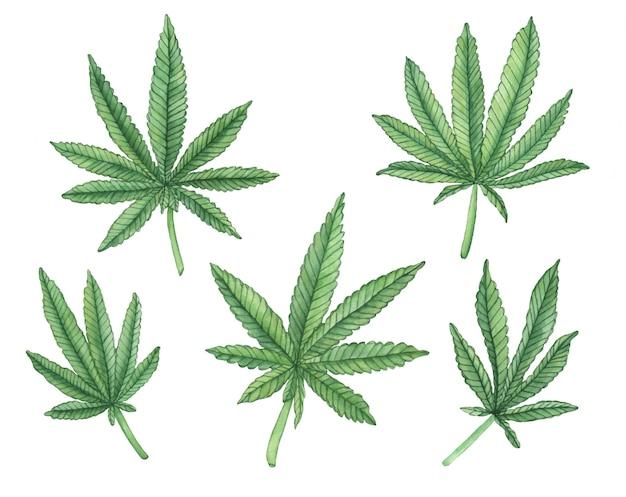 Ensemble aquarelle de branche verte de gros chanvre et feuilles