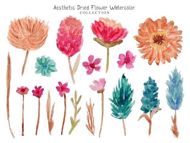 Un ensemble d'aquarelle de fleurs séchées esthétiques