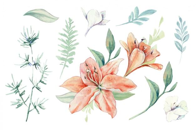 Ensemble aquarelle de lis, de boutons et de feuilles.