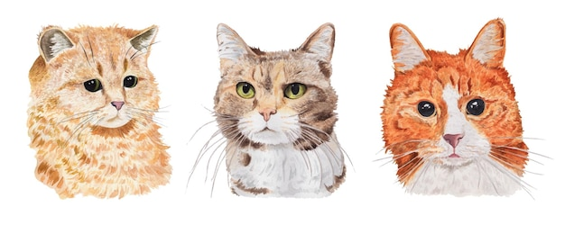 Ensemble aquarelle de portraits de chats