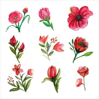 Ensemble d'aquarelle rose de fleurs sauvages fraîches