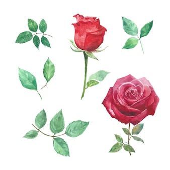 Ensemble d'aquarelle rose, illustration dessinée à la main d'éléments blanc isolé.