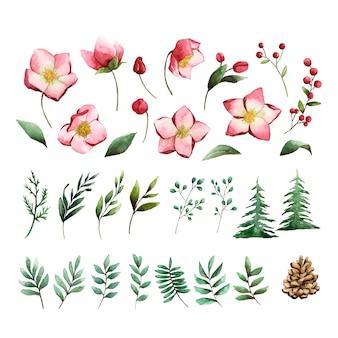 Ensemble aquarelle de vecteur de fleurs et feuilles d'hiver