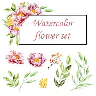 Ensemble d'aquarelles florales