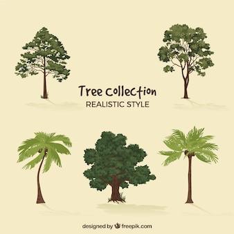 Ensemble d'arbres dans le style 2d