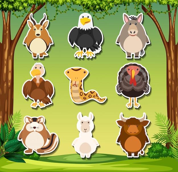 Ensemble d'autocollant d'animaux sauvages