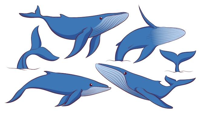 ensemble de baleine bleue dessinés à la main