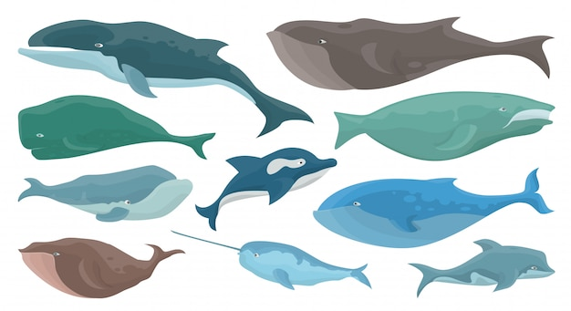 Ensemble de baleine de mer
