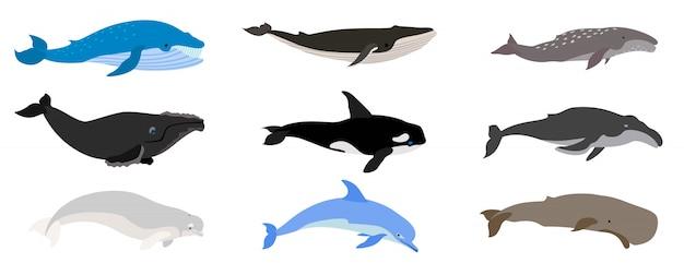 Ensemble de baleines, style plat