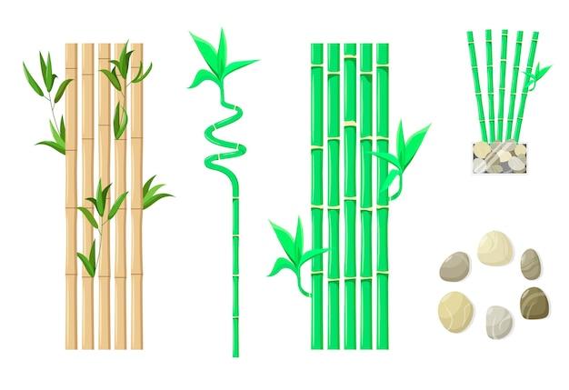 Ensemble de bambou avec des feuilles sur fond blanc