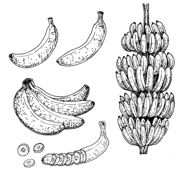 Ensemble de bananes et de fruits tropicaux. croquis collection dessinée à la main.