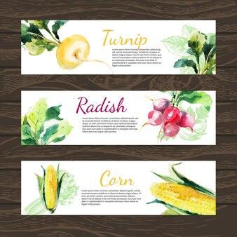 Ensemble de bannière horizontale d'aliments biologiques à l'aquarelle et à l'esquisse. concevoir avec du maïs, du radis, du navet. illustration vectorielle