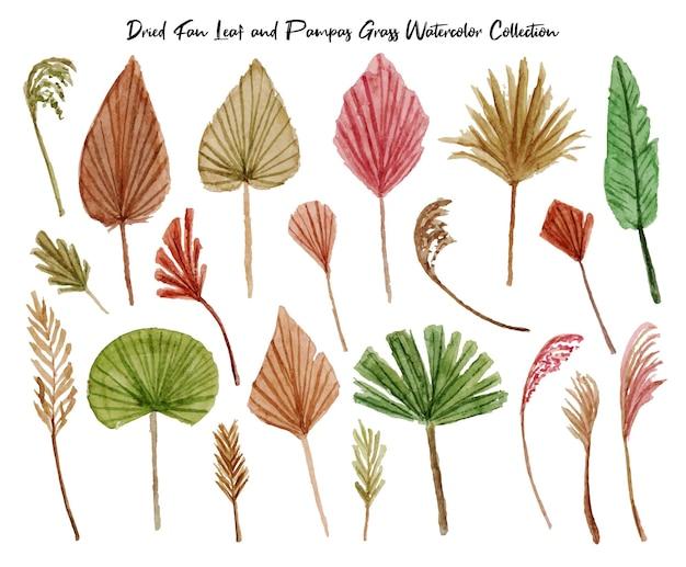 Un ensemble de belles aquarelles de feuilles d'éventail séchées et d'herbe de pampa peintes à la main