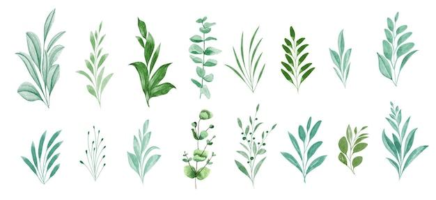 Ensemble de belles feuilles vertes aquarelle