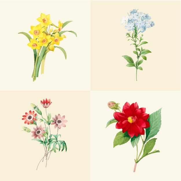 Ensemble de belles fleurs sauvages en fleurs